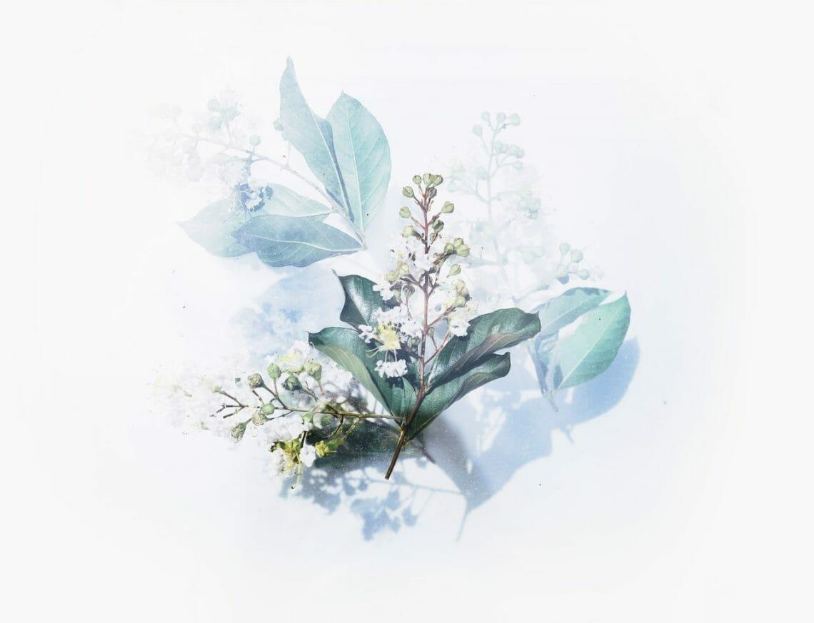 artsy-beautiful-flora-2395250